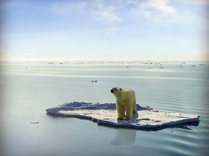 Polar bear on a remnant ice floe.