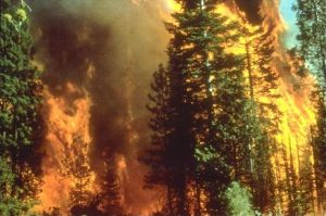 Wildfire_in_California.jpg