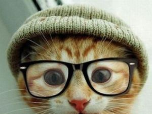 adorable cat glasses hat