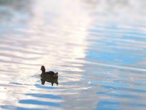 Duck dynasty on a&e  facebook, Duck dynasty on a&e. 5,335,534 likes
