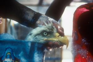 eagle_wash_Exxon_Valdez_89.jpg