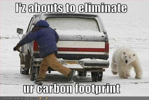 funny-pictures-bear-will-eliminate-your-carbon-footprint.jpg
