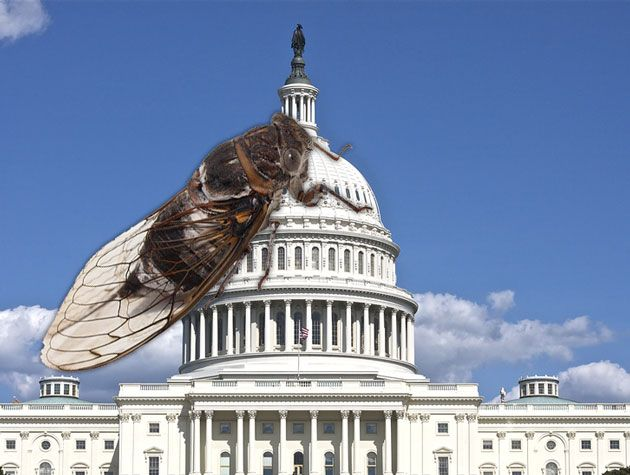 A Political History of the Cicadas