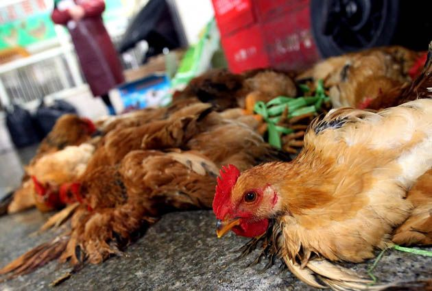 The Latest Bird Flu Freakout, Explained
