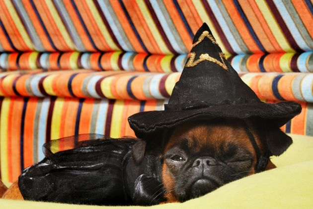 Witch Pup