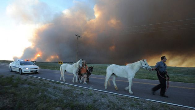 horses in colorado wildfire