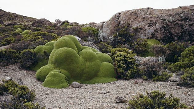 6 Photos of the Oldest Living Things in the World