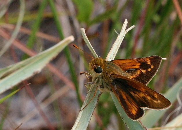 The Meske's skipper was AWOL for a decade before returning.