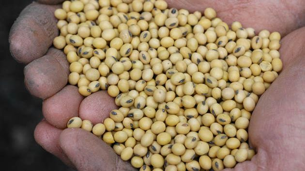 roundup soybeans Roundup ready soybeans (the first variety was also known as gts 40-3-2 ( oecd ui: mon-04032-6)) are a.